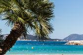Palmeras en costa azul — Foto de Stock