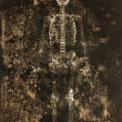 Skeleton with grungy background — Stock Photo #28386049