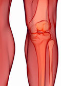 Human knee anatomy — Stock Photo
