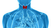 X-ray  illustration of the male thyroid gland  — Stock Photo