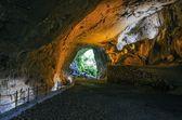 Cave dans la forêt — Photo