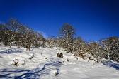 冬天的天堂 — 图库照片