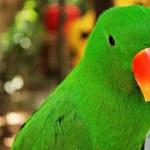 pássaro bonito papagaio verde — Foto Stock