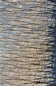 Bark detail of a palm tree — Stock Photo