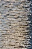 Detalle de la corteza de un árbol de palma — Foto de Stock