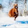 Stock Photo: Russian-horse