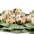 Royalty-Free Stock Photo: Nest of quail eggs and green leaves on a white background