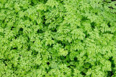 Background of fresh green spring leaves in daylight — Stock Photo