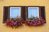 An old window with shutters in Tubingen, Germany — Stock Photo