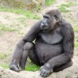 Male silverback gorilla, single mammal on grass — Stock Photo #39580793