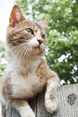 Brown and white cat sitting on a wooden fence — Stock Photo