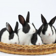 Cute bunnies — Stock Photo