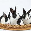 Cute bunnies — Stock Photo #41539331