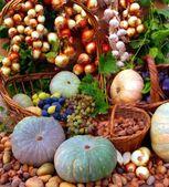 Vegetables from the garden plot — Stock fotografie