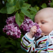 Stock Photo: Baby smelling lilac