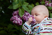 Baby smelling lilac — Stock Photo