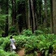 Stock Photo: Tourists in Redwoods