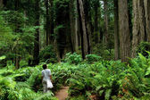 Tourists in Redwoods — Stock Photo