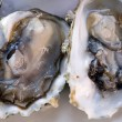 Stock Photo: Fresh half-shell oysters on plate