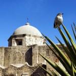 Historical mission San Jose y San Miguel de Aguayo — Stock Photo