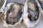 Fresh half-shell oysters on plate — ストック写真
