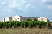 Tokaj vineyard — Stock Photo