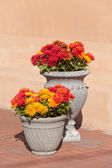 Flowers outside gift shop in  Albuquerque — Stock Photo