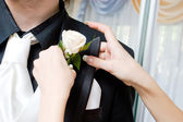 A white rose in the hands of the girl by the black suite of the man — Stock Photo