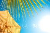 Background with tropical sky — Stock Photo