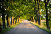Tunnel of trees — Stock Photo