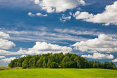 Green forest and blue sky — Stock Photo