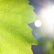 Sumbeams and a leaf — Stock Photo