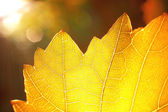 Sumbeams and a yellow leaf — Stock Photo