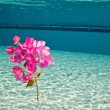A flower under the water — Stock Photo