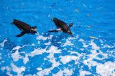 Penguins swim — Stock Photo