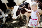 Girl and a cow — Stock Photo