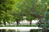 Park miejski w wiosna — Zdjęcie stockowe
