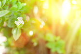 Sunlight and flowers — Stock Photo