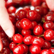 Cherries in the plate — Stock Photo