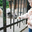 At the zoo — Stock Photo #29320143