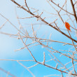 Frozen branches and sky — Stock Photo