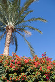 Palm tree, blue sky and flowers — Stock Photo