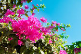 Bright tropical flowers — Stock Photo