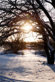Sunset in winter — Stock Photo
