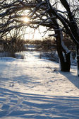 Sunset in winter — Stock Photo