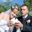 Two pigeons in hands of newly-married couple — Stock Photo
