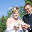 Stock Photo: Two pigeons and newly-married couple