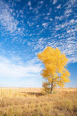 Background with yellow tree — Stock Photo