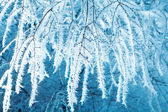 Blue branches — Stock Photo