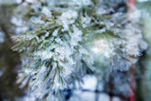 Branch of a conifer with snow in lights — Stock Photo
